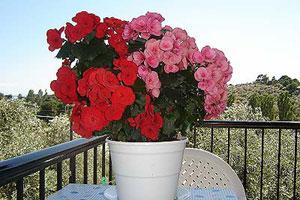 Irini balcony